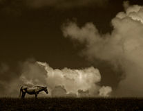 Horse Scenic - sepia Royalty Free Stock Photos