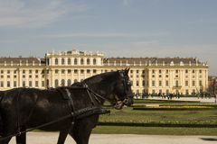 Horse at schoenbrunn palace Stock Images