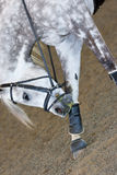 Horse Scratching Royalty Free Stock Photos