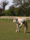 Horse Scratching Stock Photos