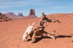 Horse scull hanging on dry log on deserted land Stock Image