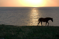 Horse and sea Royalty Free Stock Image