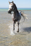 Horse and the sea Royalty Free Stock Photos