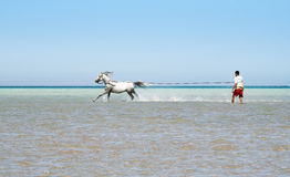 Horse and the sea Royalty Free Stock Photography