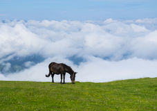Horse and sea of clouds on the slopes of Mount Txindoki. Stock Photography