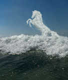 Horse from sea foam. On a wave crest Royalty Free Stock Images