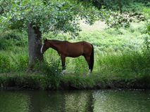 The horse seems to confide in the tree Royalty Free Stock Photography