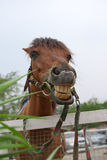 Horse with a sense of humor. Horse at water market from Thailand Royalty Free Stock Photo