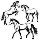 Horse. Set of three horses. Black white picture, isolated on white background, vector illustration Royalty Free Stock Photo