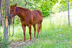 Horse in shade Royalty Free Stock Images