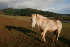 Horse with shadow Royalty Free Stock Photography