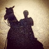 Horse shadow Stock Images