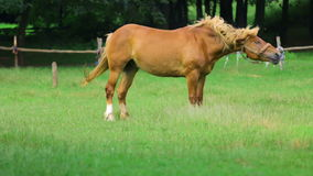 Horse Shakes Off The Dust stock video footage