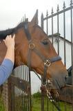 Horse shiatsu massage Royalty Free Stock Photos