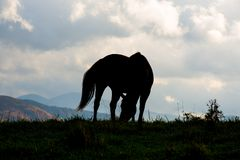 Horse Shiloutte Stock Photos