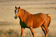 Horse shining Royalty Free Stock Photos