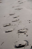 Horse Shoe Prints in the Sand Royalty Free Stock Images