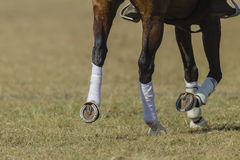 Horse Shoes Rider Boots Details Royalty Free Stock Photos