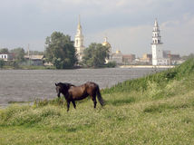 Horse on the shore of the pond, and Demidov slanted tower of the Transfiguration Cathedral. Nevyansk. Russia. Stock Photography