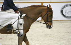 Horse Show 2007 royalty free stock photography