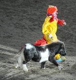 Horse show Royalty Free Stock Photos