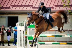 Equestrian Horse Rider Jumping.Picture showing a girl performing in show jumping competition royalty free stock photography