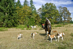 Horse Show Hunt Pasture Field Royalty Free Stock Photography