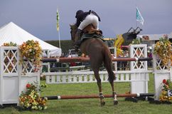 Horse show jumping stock images