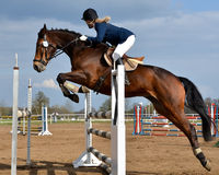 Horse show jumping royalty free stock image