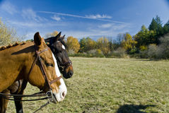 Horse Show Pasture Field Royalty Free Stock Image
