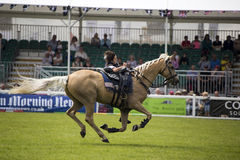 Horse show Royalty Free Stock Image