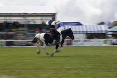 Horse show Stock Photos