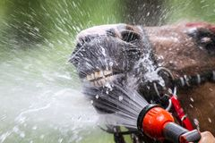 Horse shower Royalty Free Stock Photos