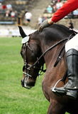 Horse on showjump event. Galloping Royalty Free Stock Images