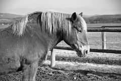 Horse from the side Royalty Free Stock Images
