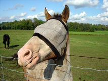 Horse Side Profile Royalty Free Stock Photography