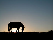 Horse silhouette. At sunset, still evening Stock Images