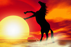 Horse silhouette Stock Image