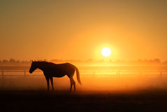 Horse silhouette on a background of dawn Royalty Free Stock Images