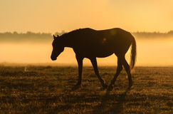 Horse silhouette on a background of dawn Stock Photos