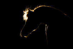 Horse silhouette on black Royalty Free Stock Photo
