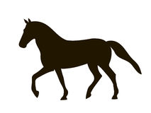 Horse. Silhouette in black on a white background Stock Photo