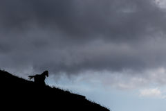 Horse silhouette. A silhouette of a horse on a cliff, with a moody sky on the background Royalty Free Stock Photo