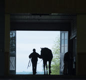 Horse Silhouette Royalty Free Stock Images