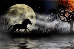 Horse silhouette in the moonlight Stock Image
