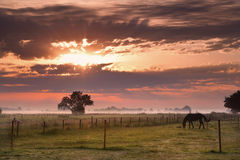 Horse silhouette on morning pasture Stock Image