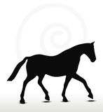 Horse silhouette. In Parade Walk position Royalty Free Stock Photos