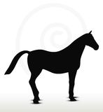 Horse silhouette in standing still position. Horse silhouette in running position on white Stock Image