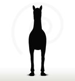Horse silhouette in standing still position Stock Images