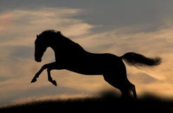 Horse silhouette in sunset Royalty Free Stock Images
